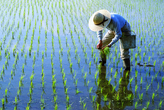 empower-farmers